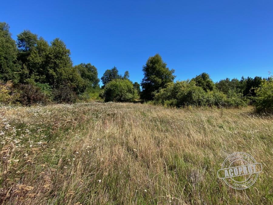 Pulmón verde en La Araucanía
